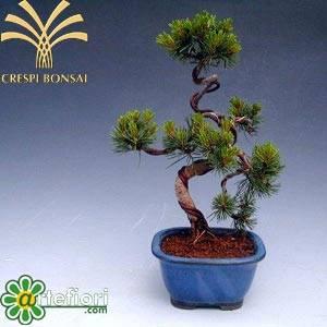 Artefiori - bonsai: stili di coltivazione