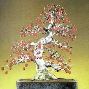 Artefiori bonsai da frutto il melo for Bonsai da frutto vendita