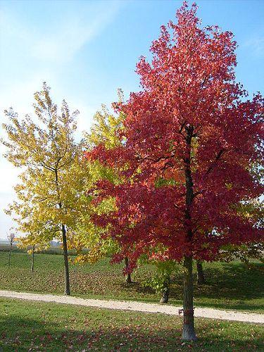 Galleria d arte e fiori genova vendita online piante fiori for Foto alberi da giardino