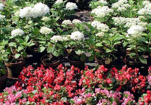 Galleria d arte e fiori genova vendita online piante fiori for Bonsai in vendita online