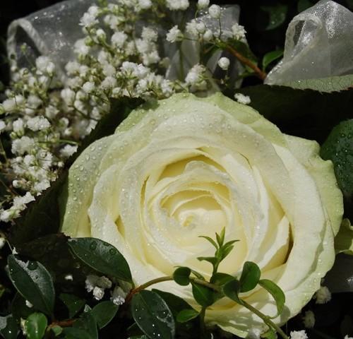 Galleria d arte e fiori matrimonio addobbo wedding planner for Acquisto piante peperoncino