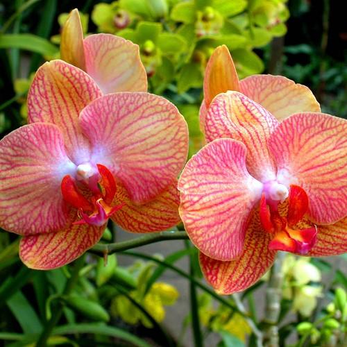 Galleria d arte e fiori piante orchidea fiori galleria d for Acquisto piante peperoncino