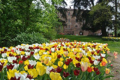 Giardino Zen Vendita : Galleria d´arte e fiori genova vendita online piante