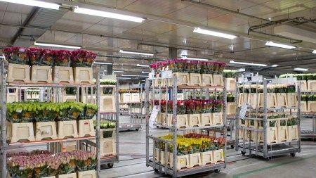 galleria d arte e fiori genova vendita online piante fiori giardinaggio bonsai vivaio mobili. Black Bedroom Furniture Sets. Home Design Ideas