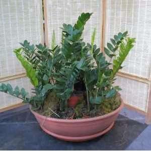 apiante da interno pinate da appartamento : Artefiori - Propagare le piante da appartamento