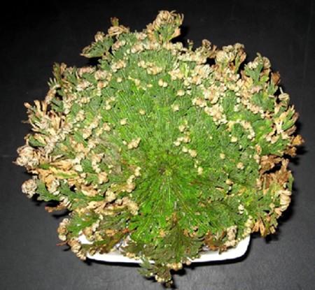 Artefiori for Piante da comprare
