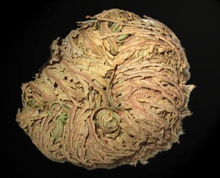 Artefiori for Comprare bonsai online
