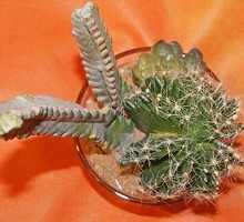 Plants Artificial Plants Cactus in glass  Verdemax